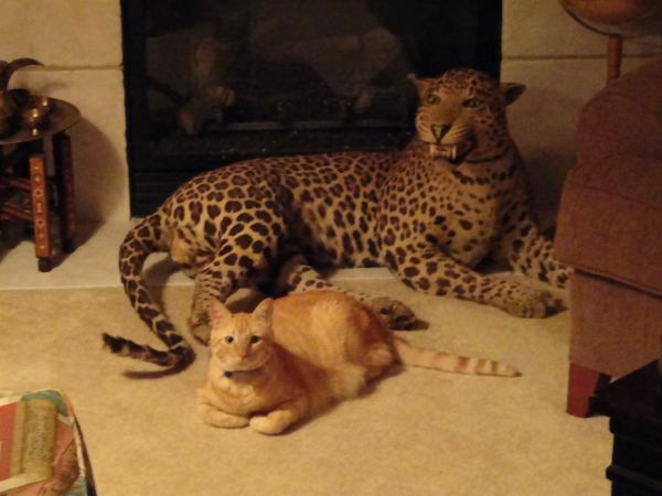 Eddy and Leopard